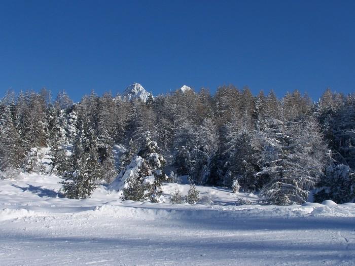 neige Edelweiss Ancelle